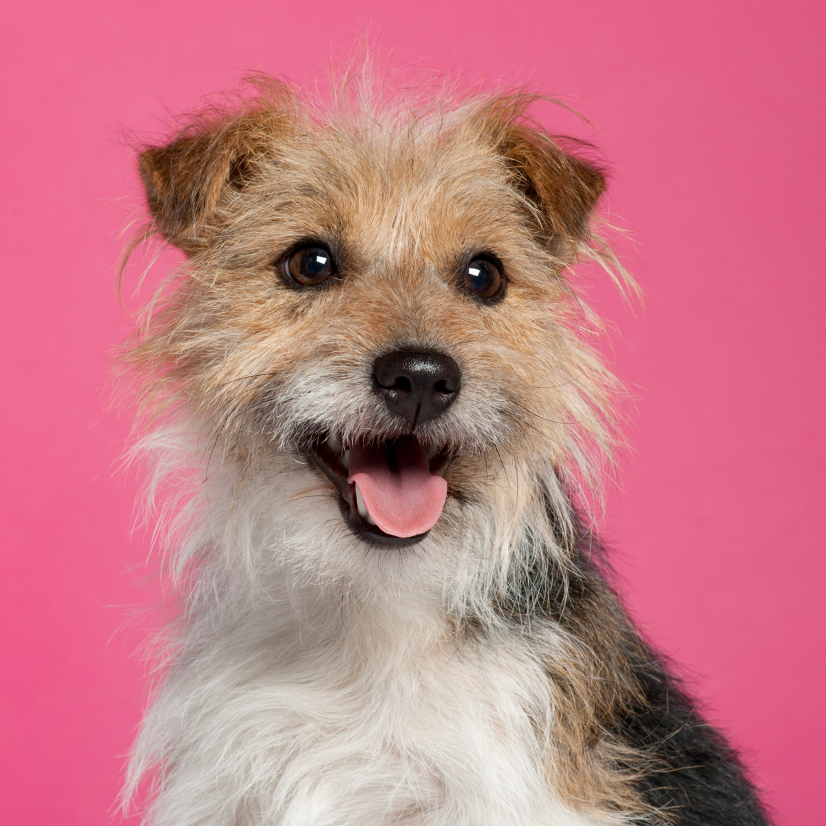 cute dog with pink background