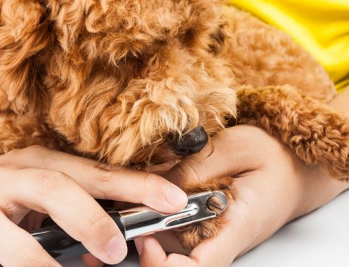 Trim Dog Nails Carefully and Provide Treats Along the Way