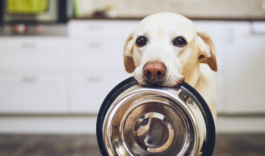 dog holding bowl in mouth