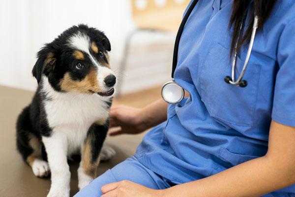 Dog sitting beside vet