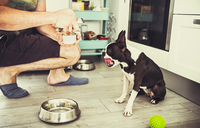 Feeding dog canned food