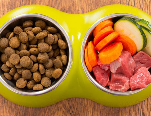 The Best Grain-Free Foods For Your Dog