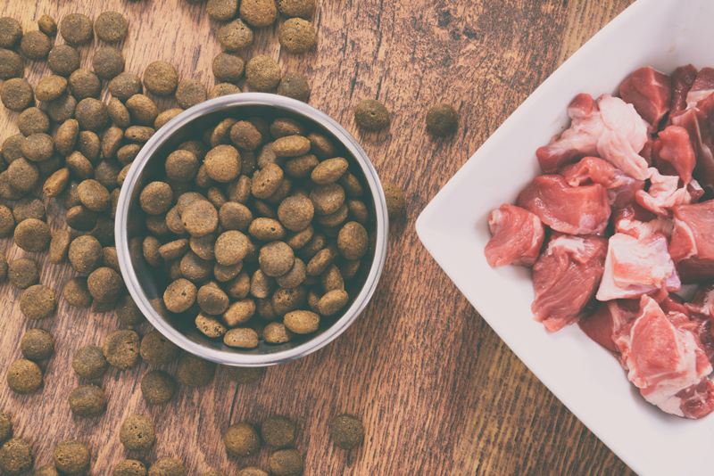 Natural food in a bowl as opposite of dry dog's kibble