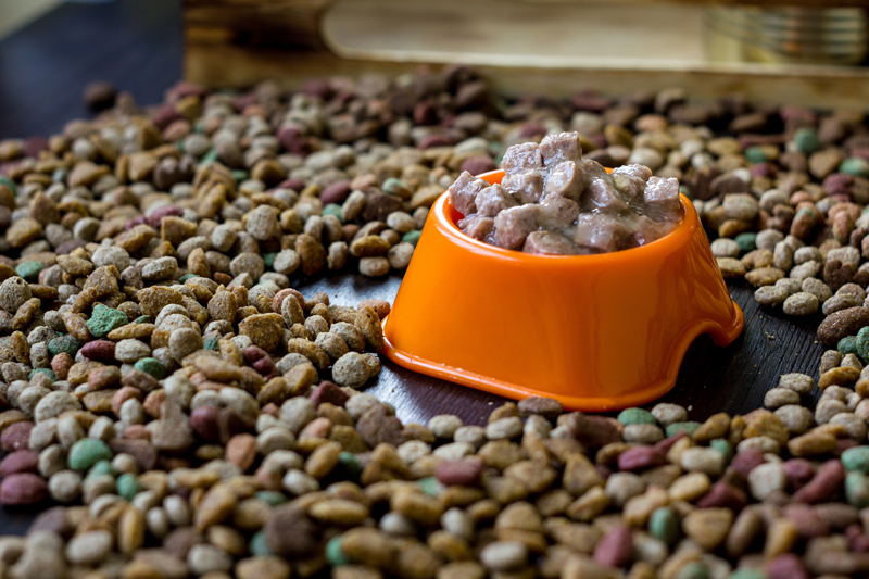 Wet canned pet food in a bowl surrounded by dry food.