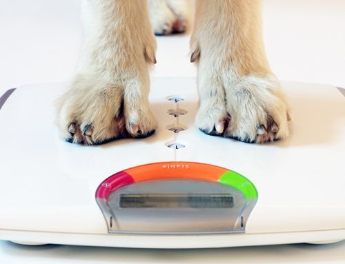 How do I help my overweight dog lose weight?