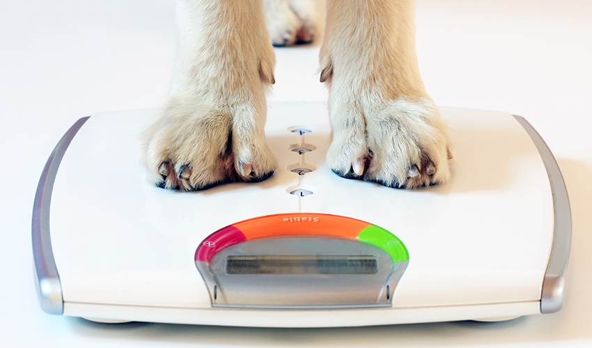 dog paws standing on bathroom scale